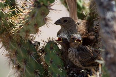 MammaAndBabyBird-0-IMG_2001.CR2