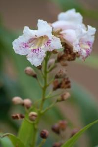 FloraAndFauna--2-IMG_2228.CR2