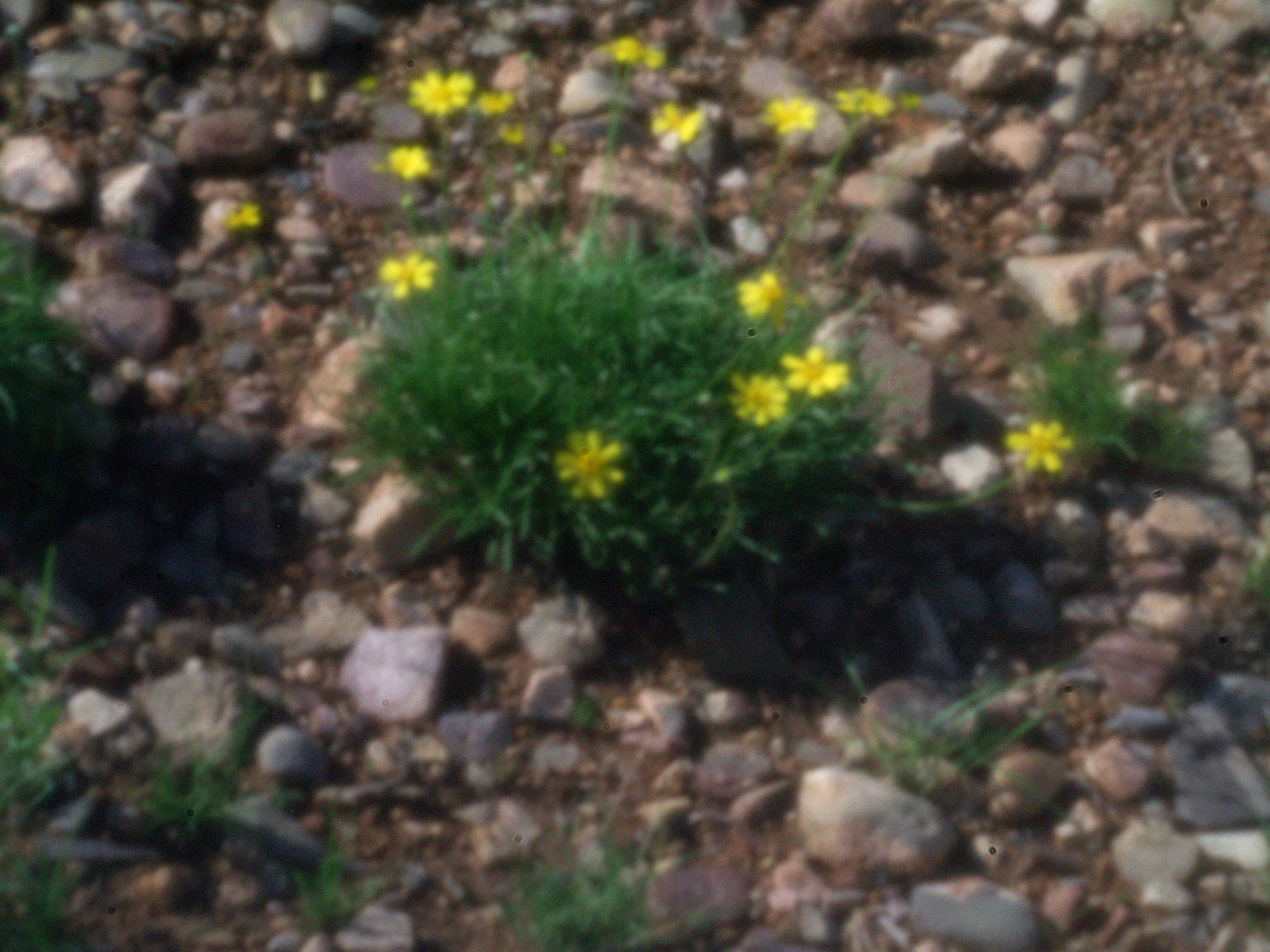 PinHoleCountryside-Flowers-117-P8220242.ORF