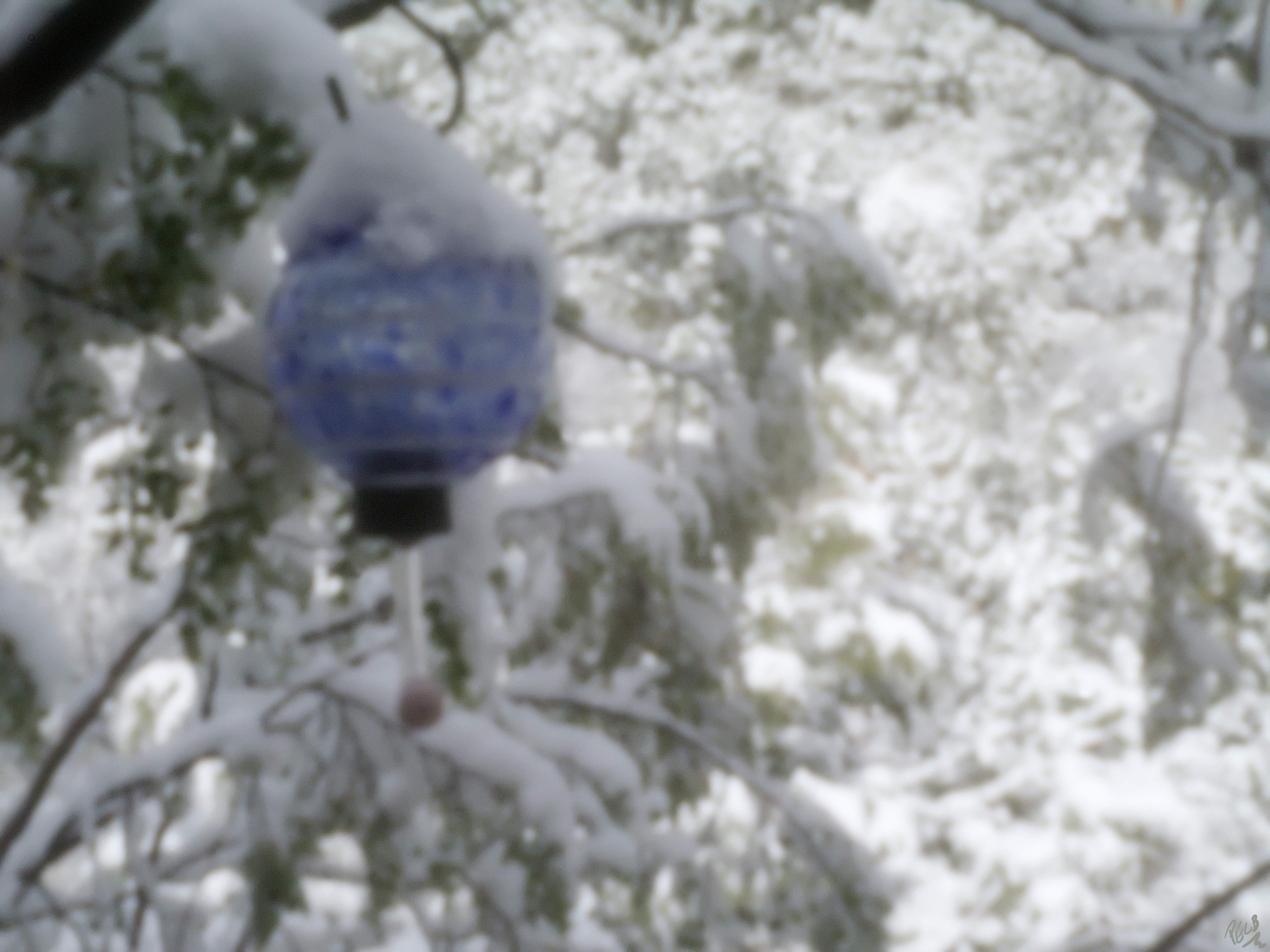 WinterHummingBirdFeeder