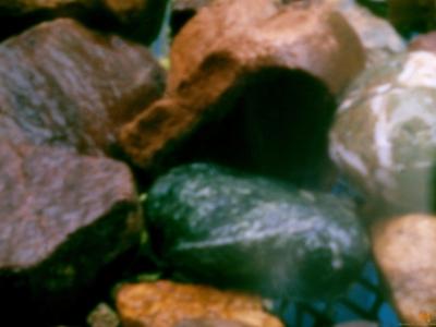 WetRocks3