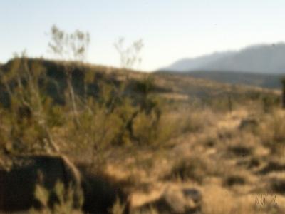Pin-Hole Burro at Red Rocks